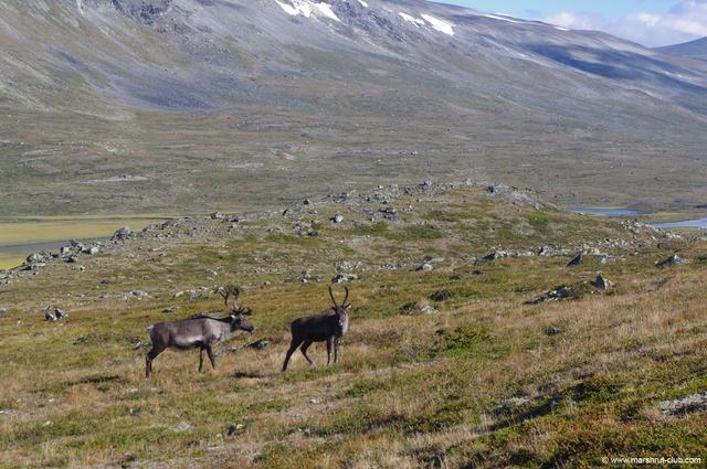 Тварини Норвегії