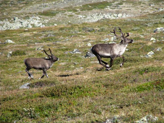Фауна Норвегії