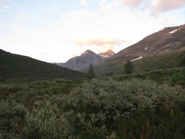 Флора Норвегії