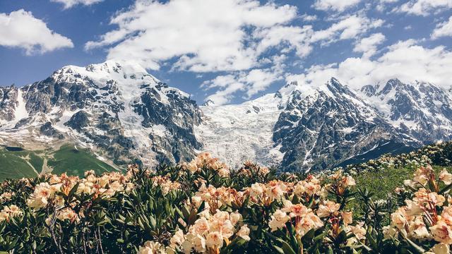 Цветы на фоне ледника