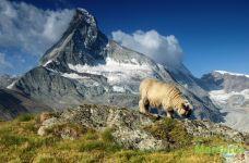 Маттерхорн и овечка
