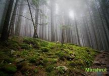 Облако в лесу