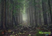 Лиственный лес в Карпатах