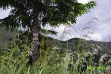 Маркер на дереве