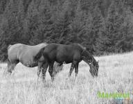 Домашние животные в горах