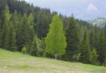 Нетипичное дерево