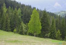 Лиственные деревья весной