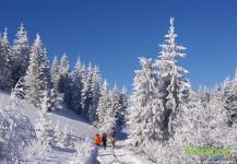 Зимние тропы