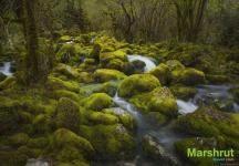 Субтропический лес Мегрелии