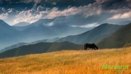 Лошадь и горы