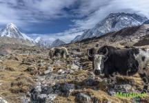 Фауна Непала