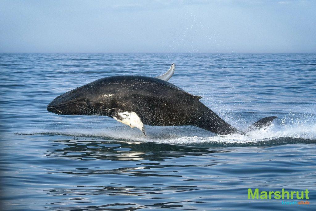 Игры китов