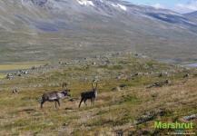 Фауна Норвегии