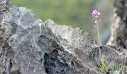 Упорное растение