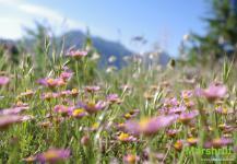 Цветущая лужайка